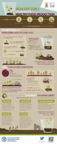 Soil and Food Production